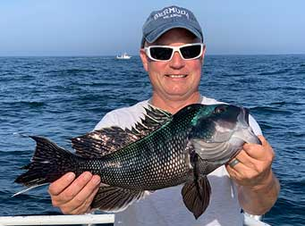 A man wearing sunglasses on a sunny summer day holds up the sea bass he caught.