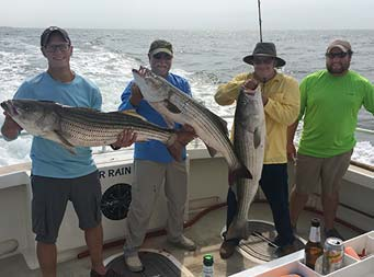 Four men stand together and three of them hold up large striped bass.