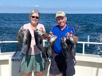 With a blue sky in the background and deep blue water, an older woman and gentleman smile big and hold up 3 sea bass each.